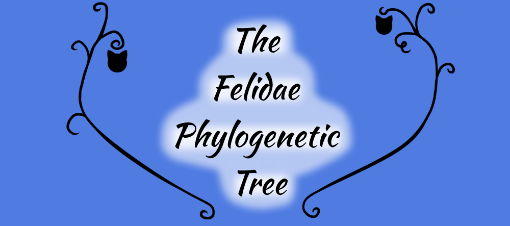 Felidae Phylogenetic Tree