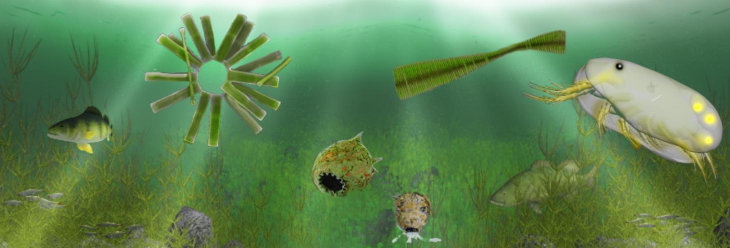 The Aquatic Messenger