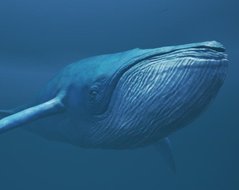 blue whale  jazz cousins