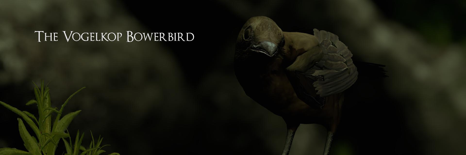 The Vogelkop Bowerbird