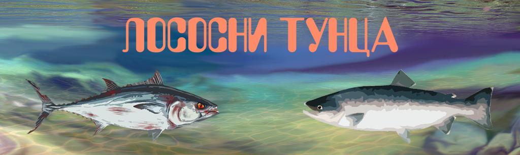 Salmon a Tuna
