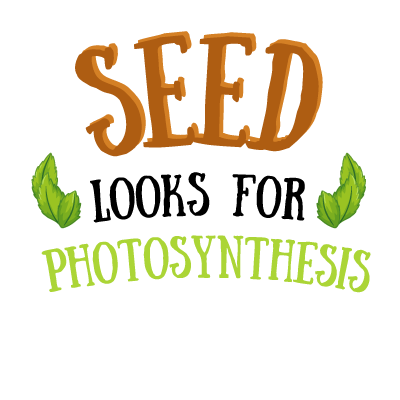 Seed : Look for photosynthesis