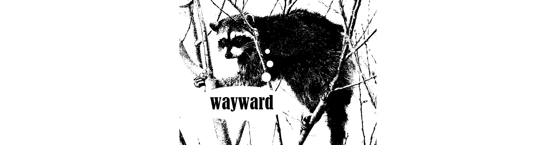 Wayward Raccoon