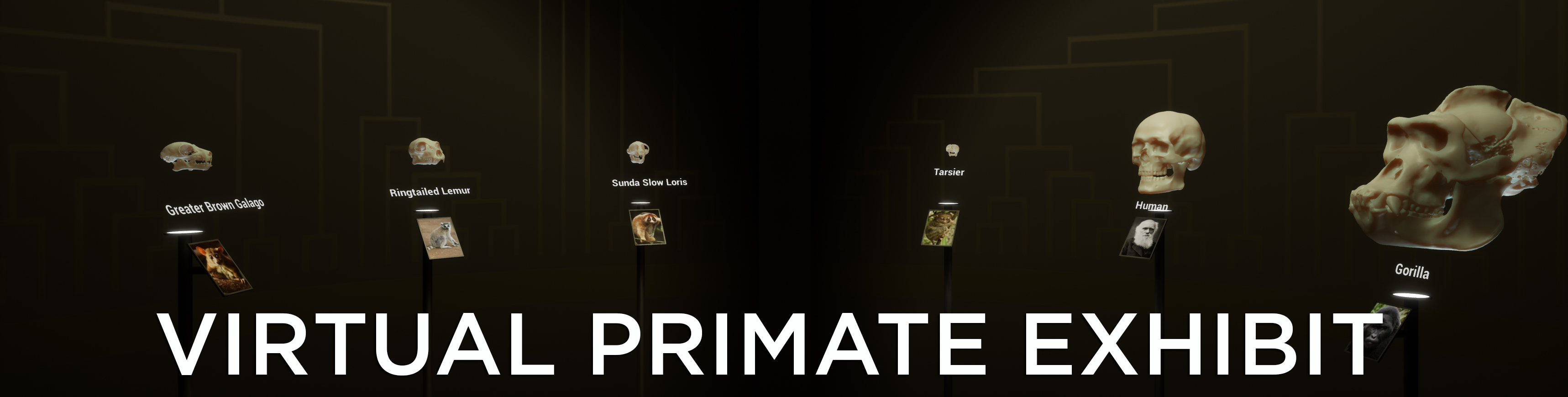 Virtual Primate Exhibit