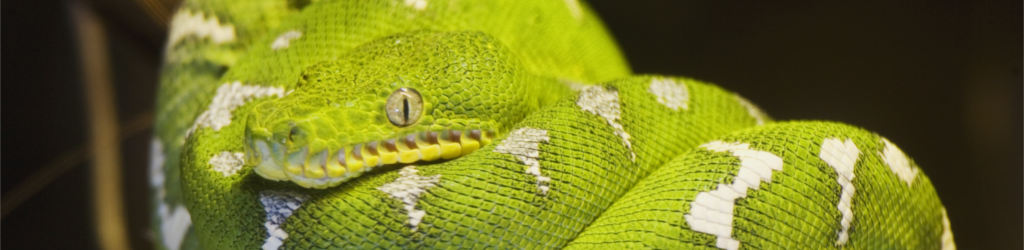 Snake Puzzle HD