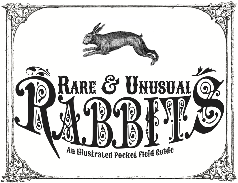 Rare and Unusual Rabbits