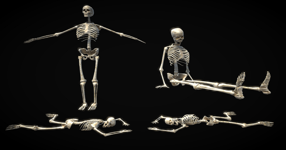 PBR Rigged Skeleton for Unity 3D