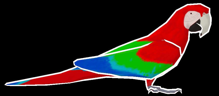 Macawkus Rawkus