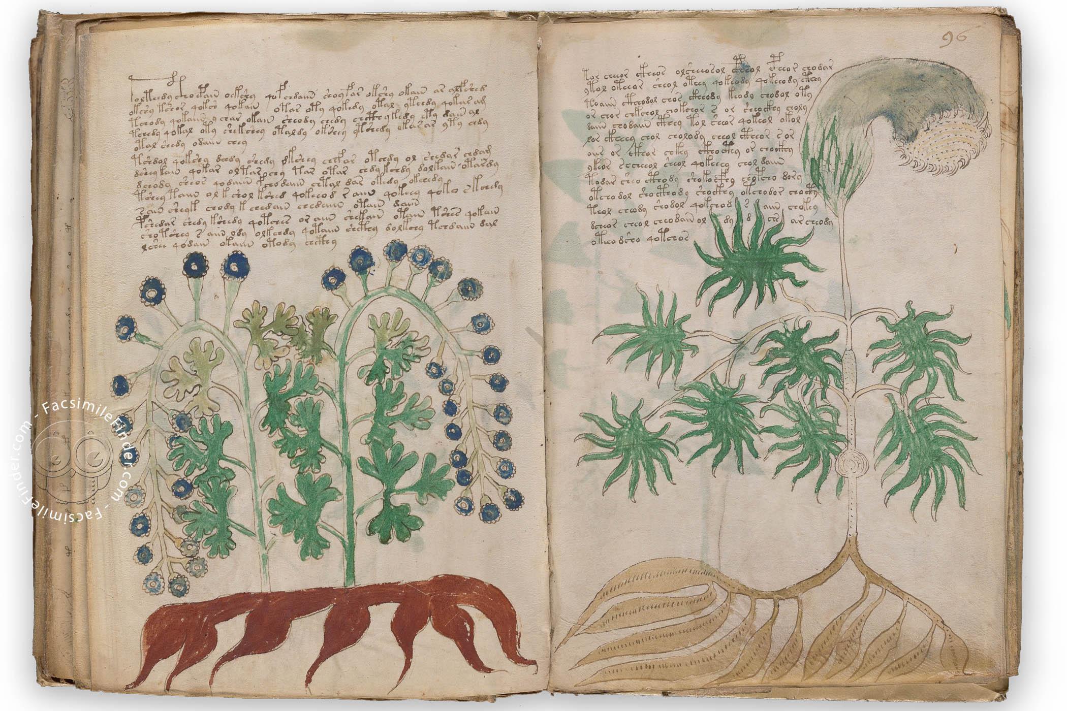 The manuscript of Voynich