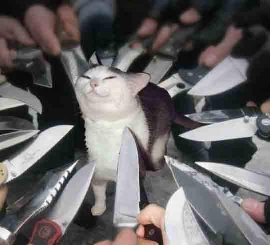 an image of a smug cat surrounded by many knives
