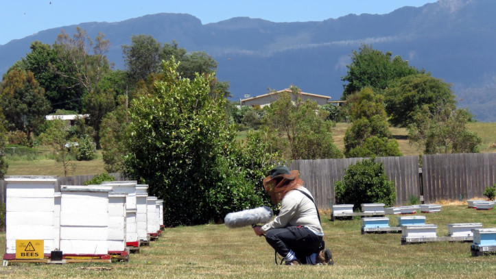Me recording bees at R. Stephens Apiarists in Mole Creek, Tasmania (photo courtesy of Mim).