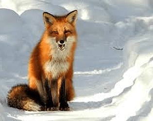 fox hunt(unity)