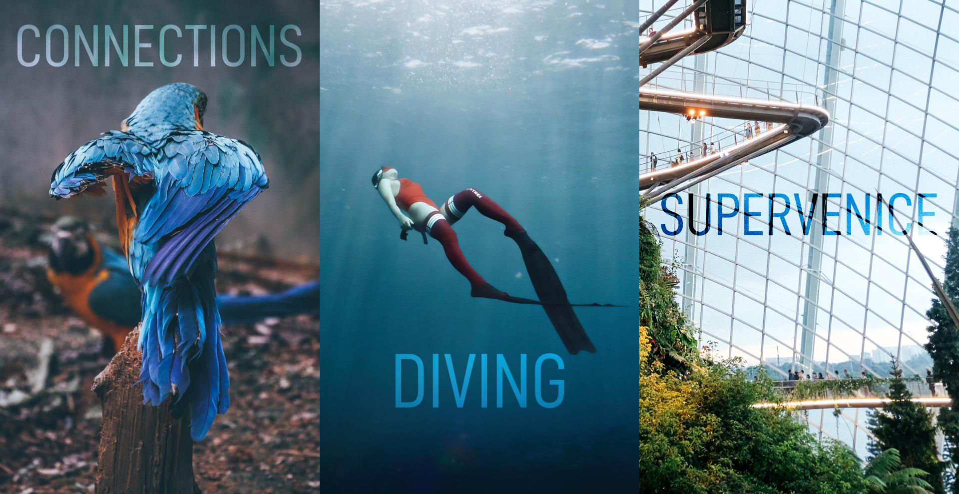 "parrot ""connections"", person diving ""diving"", futuristic garden ""supervenice"""