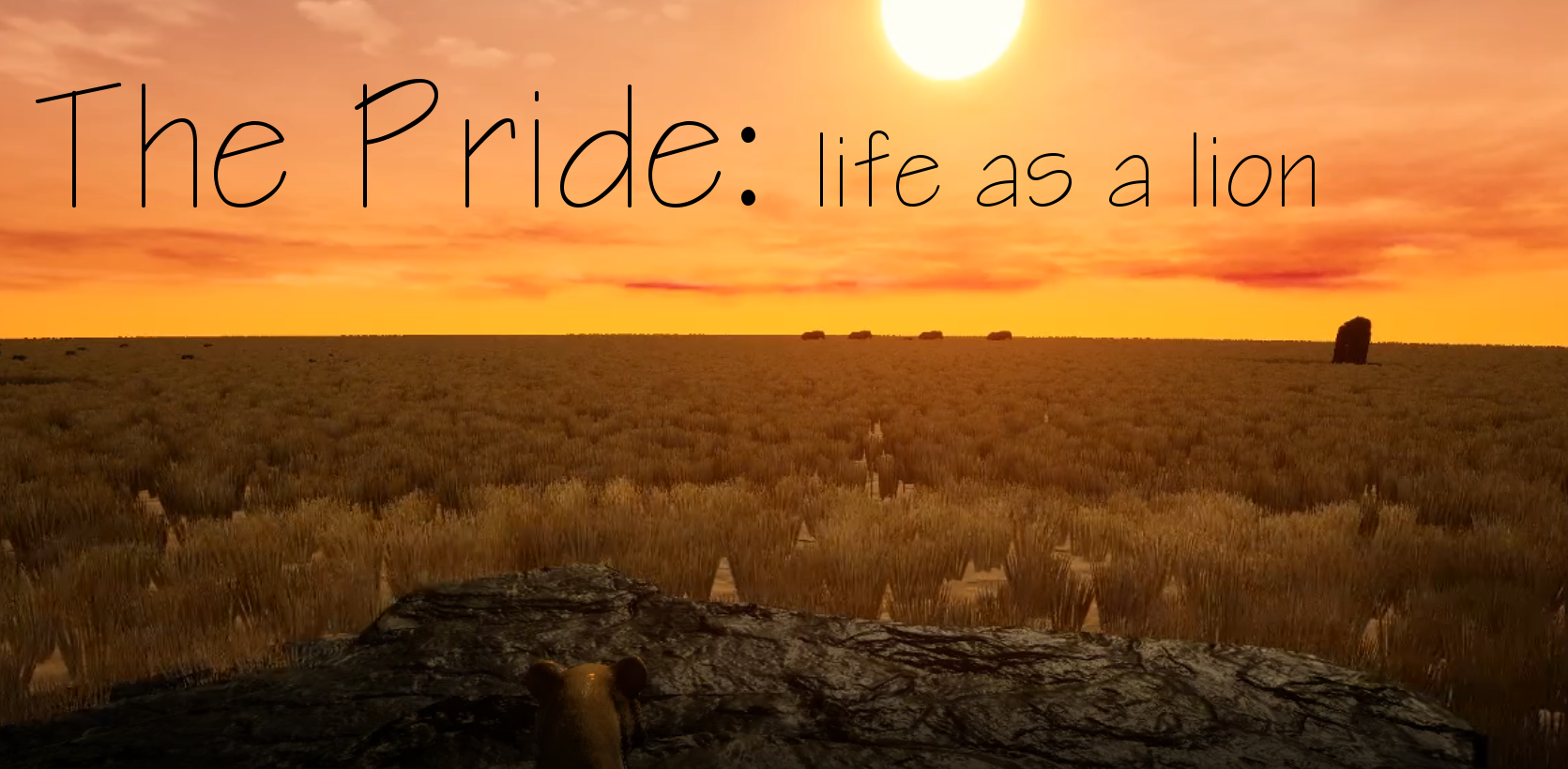The Pride: life as a lion